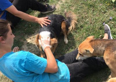 HundeImpress3456