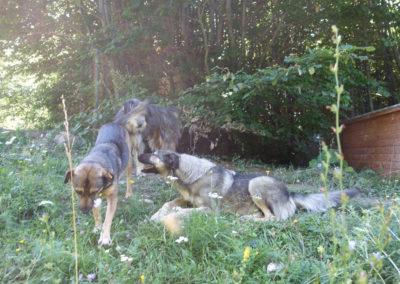 Impresshunde155612